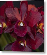 Dusty Red Orchid Metal Print