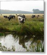 Dutch Cows Metal Print