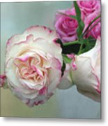 Dutch Frilled Roses Metal Print