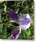 Dwarf Lake Iris Metal Print