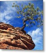 Dwarf Pine And Sandstone Zion Utah Metal Print