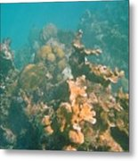 Dying Coral Metal Print