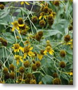 Dying Sun Flowers Metal Print