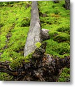 Dying Tree In The Forest Metal Print