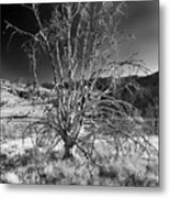 Dying Tree Metal Print