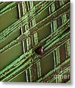 E. Coli In Culture Dish, Macro Image Metal Print