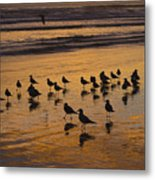 Eager Anticipation Metal Print