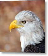 Eagle 10 Metal Print