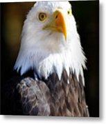 Eagle 14 Metal Print