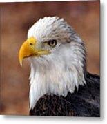 Eagle 25 Metal Print