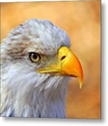 Eagle 7 Metal Print by Marty Koch