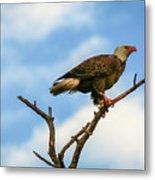 Eagle And Blue Sky Metal Print