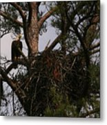 Eagle At The Nest Metal Print