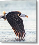 Eagle Catch Metal Print