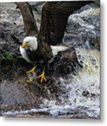 Eagle Catches Fish Metal Print