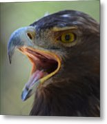 Eagle Cry Metal Print
