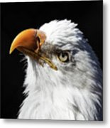 Eagle Eye Metal Print