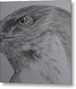Eagle Eyed. Metal Print by Cynthia Adams