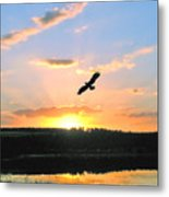 Eagle Flight Metal Print