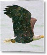 Eagle Flying In Snow Metal Print