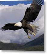 Eagle Flying In Sunlight Metal Print