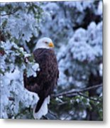 Eagle In A Frosted Tree Metal Print