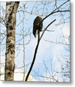 Eagle In A Tall Tree Metal Print
