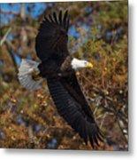 Eagle In Fall Metal Print