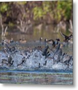 Eagle Induced Chaos Metal Print