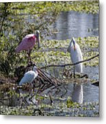 Eagle Lakes Park - Roseate Spoonbill And Friends, Socializing Metal Print