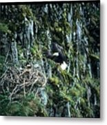 Eagle Landing On Nest Metal Print