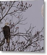 Eagle Lookout Metal Print
