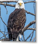 Eagle Mean Muggin Me Metal Print