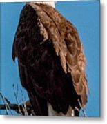 Eagle Of The Salt River Metal Print