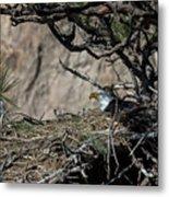 Eagle On The Nest, No. 3 Metal Print