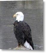 Eagle On The River Metal Print