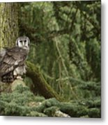 Eagle Owl In Forest Metal Print