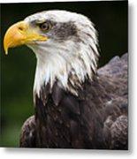 Eagle Portrait Metal Print
