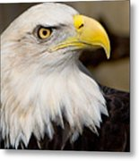 Eagle Power Metal Print