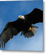 Eagle Pride Metal Print