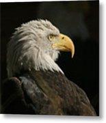 Eagle Profile 1 Original Photo Metal Print
