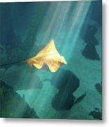Eagle Ray Underwater Metal Print