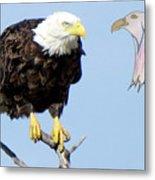 Eagle Reflection Metal Print
