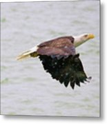 Eagle Rushing In The Snow Metal Print