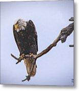 Eagle Searching Metal Print