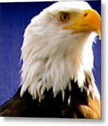 Eagle Sight Metal Print