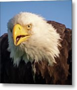 Eagle Stare 2 Metal Print