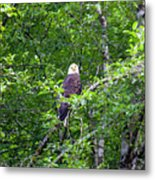 Eagle Watch Metal Print