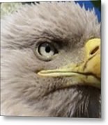 Eagle Wise Metal Print