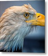 Eagle With An Attitude Metal Print by Bill Tiepelman